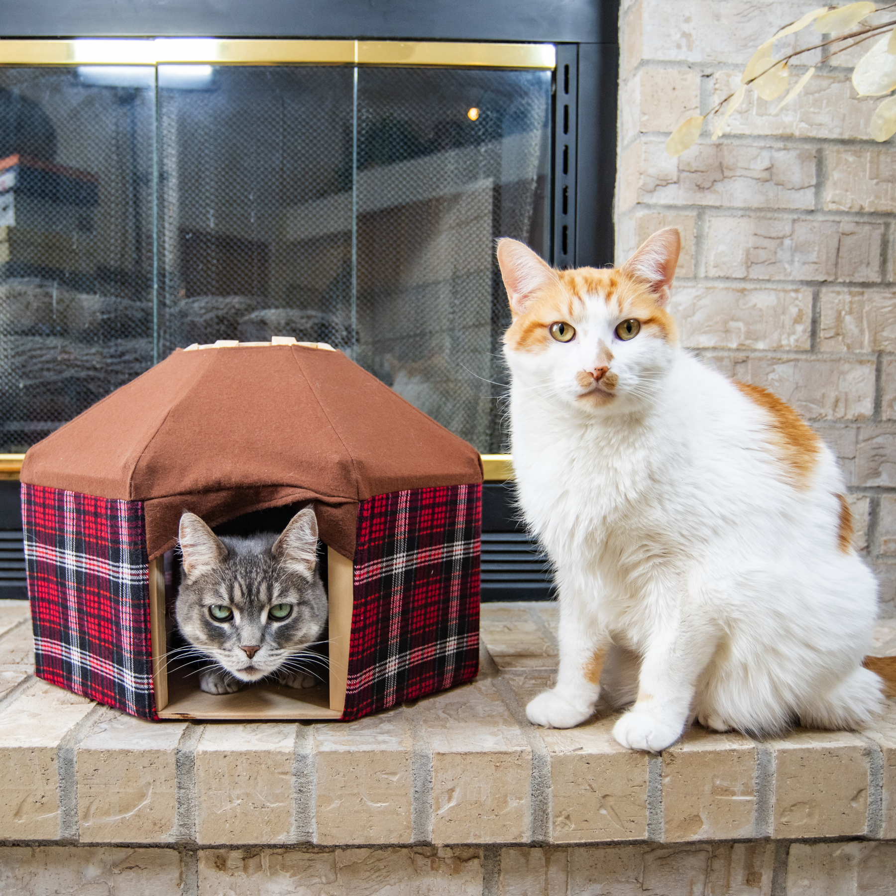 and small dogs cats Watermelon pet yurt \u2013 Special Edition pet tent for rabbits